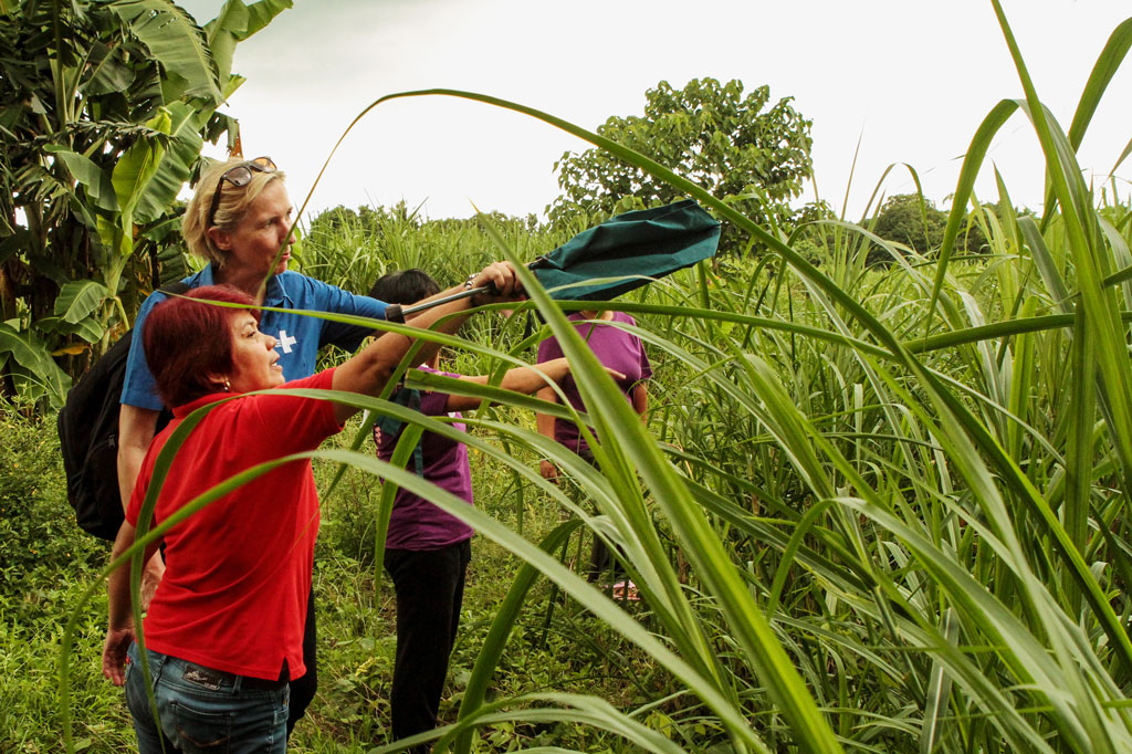 Alternativen zum Zuckerrohr - das ist eins der häufigsten Ziele für Selbsthilfegruppen der philippinischen Tuy-Region