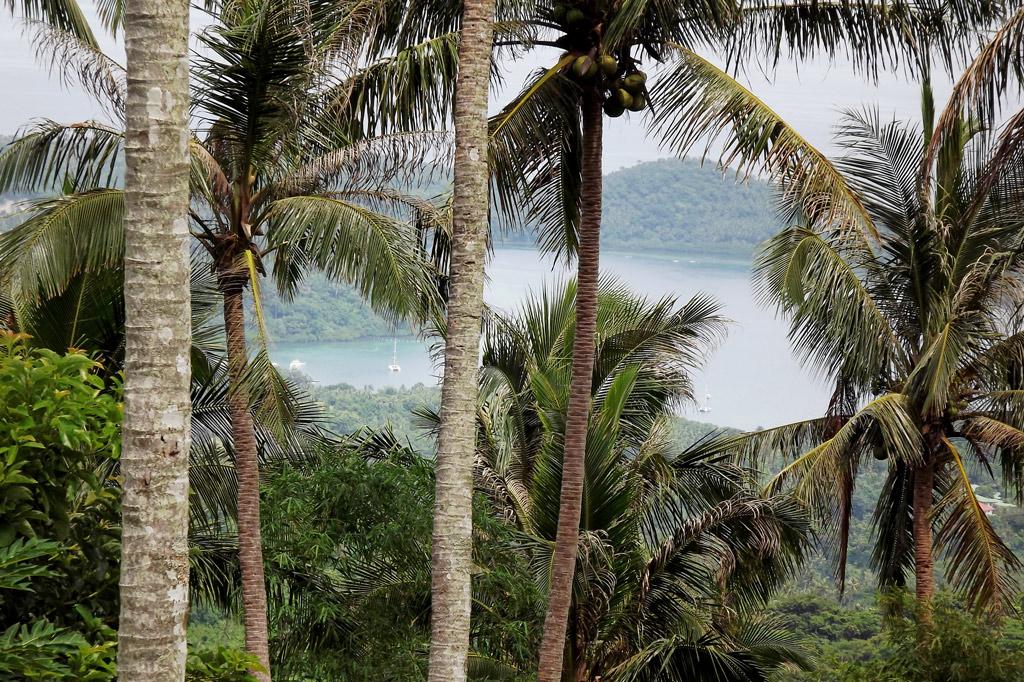 Wenn der Taifun die ersten Kokiosnüsse von den Bäumen zerrt, wird es gefährlich.