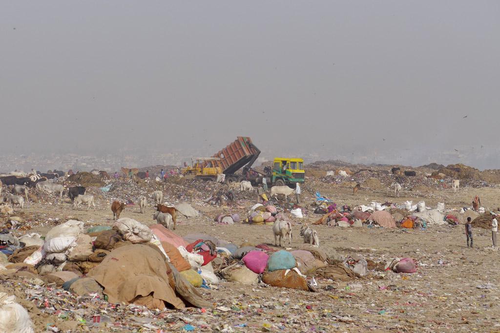 """Müll: """"Lebensraum"""" für Menschen und Tiere: Müllkippe in Neu-Delhi"""