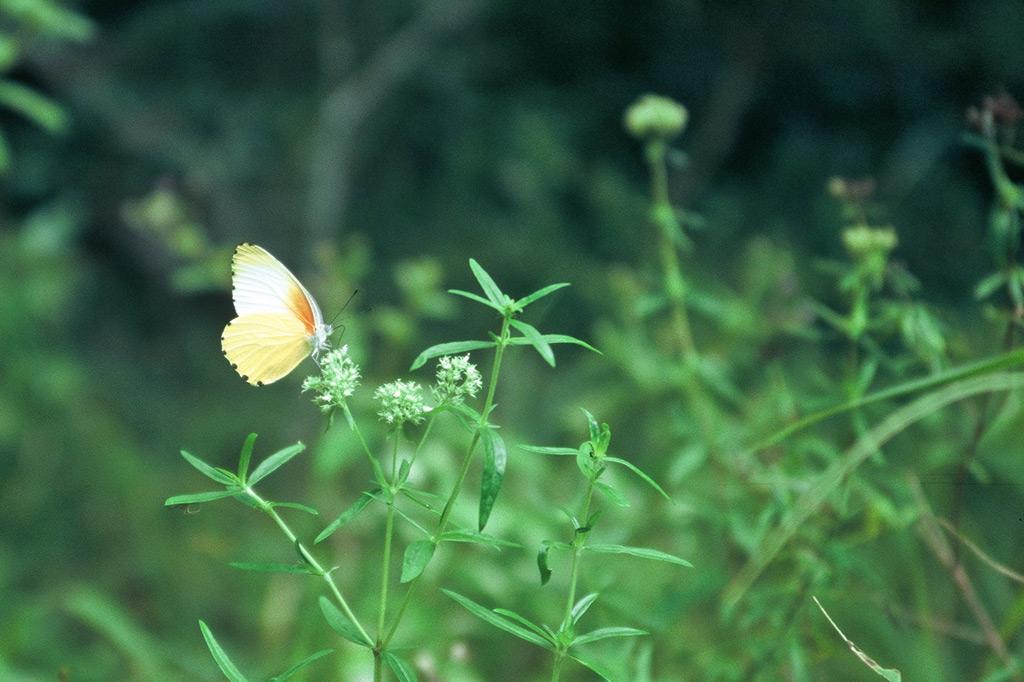 Ein Schmetterling auf einer grünen Wiese: Erinnern an den Tod - und was danach kommt
